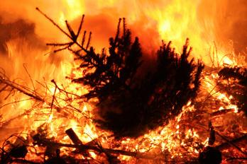 Burning Christmas Tree.Burning The Christmas Tree Pastor S Ponderings
